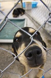 Animal Nonprofit Regulations