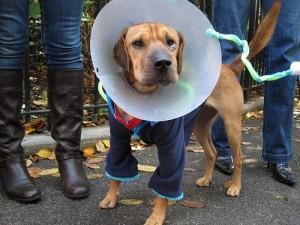 Dog Controversy