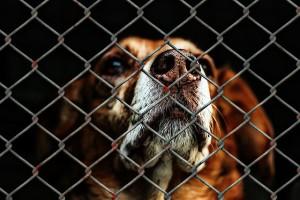 animal-shelters